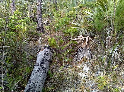 Andros Island, Bahamas, Bird inventory and assessment