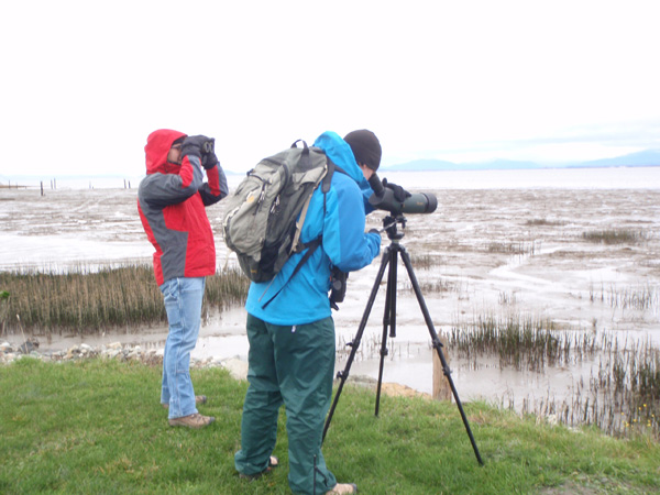 Puget Sound Shorebird Count