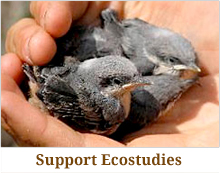 Donate to Ecostudies Institute