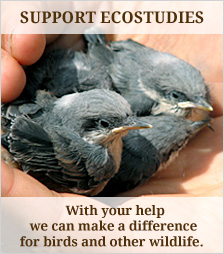 Donate to Eco Studies