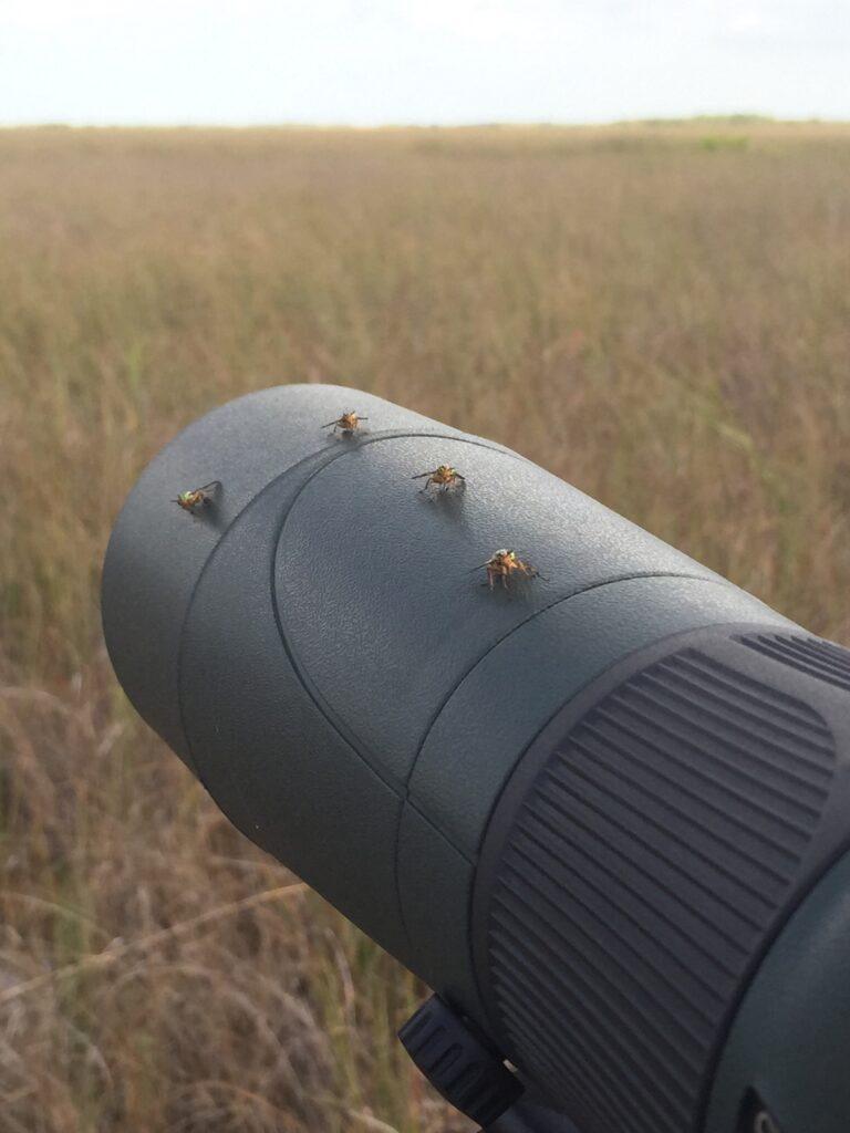 spotting scope used to re-sight birds